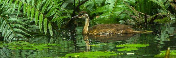 Défenseur de la conservation de la biodiversité