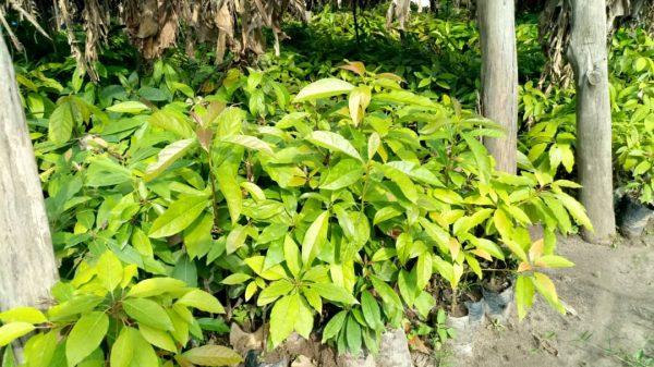 Coopérative pour le développement de l'horticulture et la protection de l'environnement (HODEP)